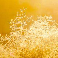 golden threads in sunlight