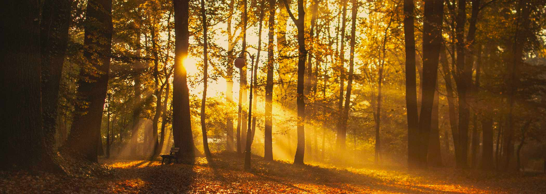 dare to shine forest trees visiblity